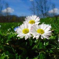 Давай поселимся в апреле... :: Galina Dzubina