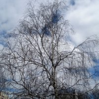 Весеннее небо.Графика. :: Елена Семигина