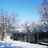 Мороз и солнце, день чудесный.... :: Татьяна Латкина