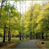 Осенний лес :: Вера