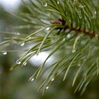 после дождя :: карина полякова