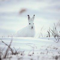 Белый снег,белый я. :: Юрий Харченко