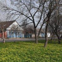 Весеннее золото :: Ольга Башарова