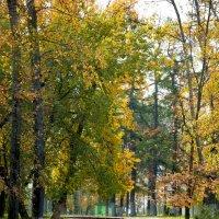 Осень :: Михаил Гажур