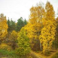 Осенний парк :: Евгений Кузьминов