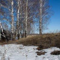 Весна :: Евгения Каравашкина