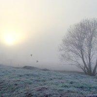Туман вблизи Оки :: NICKIII Михаил Г.