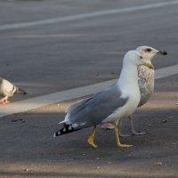Birds. :: Алексей Гудков