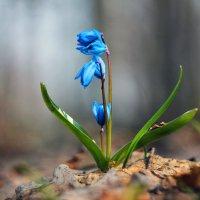 """""""Цветы весны"""" :: Serg Y"""