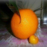 Оранжевый плод!Терпко пахучий и плотный!!Ты наливался дремотно...Под солнцем,где то на  юге! :: Людмила Богданова (Скачко)