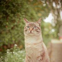 важный котик) :: Мария Пашкова