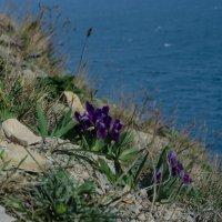 горные цветы :: Ольга Штанько