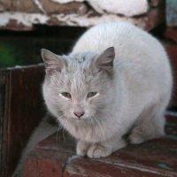 котосабачья жизнь :: Baizhan Kogambayev