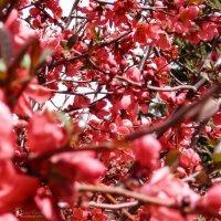 Сочная весна :: Yana Fizazi