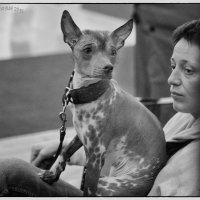 Почему собаки с хозяевами так похожи..? :: OKCAHA Валова