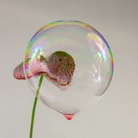 Мыльные пузыри :: Вера Бережная