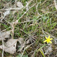 Первый весенний цветочек :: Vladislava Ozerova