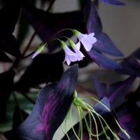 Botany :: Полина Воркачева