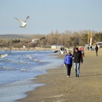 Прогуливаясь вдоль берега ... :: Елена Нор