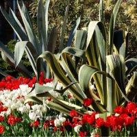 Городские цветы.... :: СветЛана D