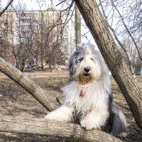 на дереве :: Лариса Батурова
