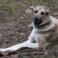 Любимый пес :: Юлия Плешакова