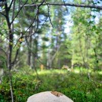 Шагая по лесу :: Viktor Pjankov