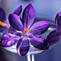 Цветы апреля :: Mariya laimite