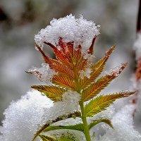 последний снег :: юрий иванов