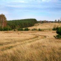 Дорога через поле :: Валерий Князькин