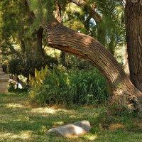 В Национальном парке Ашкелона. :: Leonid Korenfeld