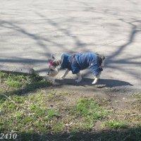 Весной пахнет! :: Нина Бутко