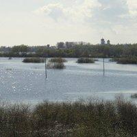 Волховские заливные луга :: Елена Павлова (Смолова)