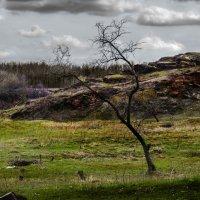 Одинокое дерево :: Геннадий Беляков