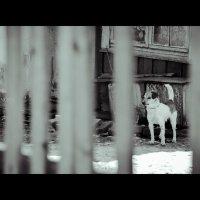 собачья скука :: Юлия Богданова