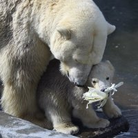 медвежата 2 :: Михаил Бибичков