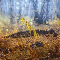 Осеннее золото. :: Kassen Kussulbaev
