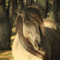 Дикая лошадь породы Коник :: Марьяна MariAnn