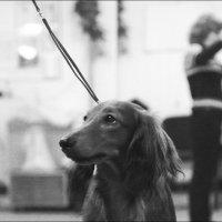 собачья тренировочная :: Oleg P.