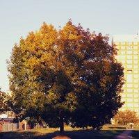 Осень :: Alex Steinberg