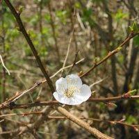 Мгновения весны :: nika555nika Ирина