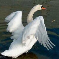 Я б в небо взлетел,но подрезаны крылья...! :: Наталья