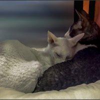 Он и Она-из серии Кошки очарование мое! :: Shmual Hava Retro