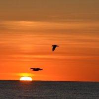 в закате дня :: linnud