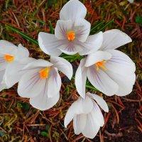 весна :: rimgis