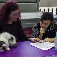 Судья и помощник,за работой -из серии Кошки очарование мое! :: Shmual Hava Retro