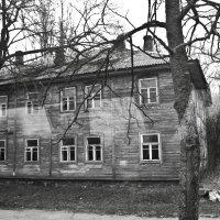 Дома в Чернобыле :: Ольга Винницкая (Olenka)
