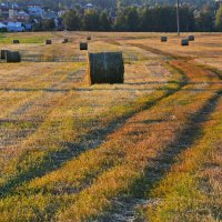 вечер в поле возле дач :: Александр С.