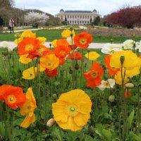 Ботанический сад Парижа :: Alexey Romanenko
