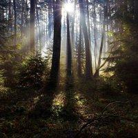 Лучи солнца в лесу :: Милешкин Владимир Алексеевич